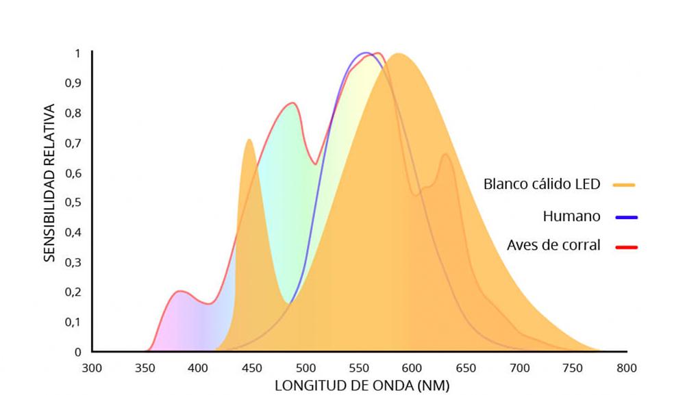 La Influencia de la Iluminación en Reproductoras de Pollos de Engorde 2